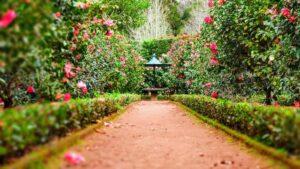 Met deze inspiratie geef jij je tuin zelf een metamorfose